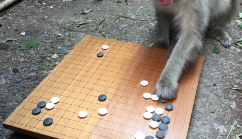 How Cute And Smart This Monkey That Play To Go Game The Was Invented In Ancient China More Than 2500 Years Ago Is Therefore Believed Be