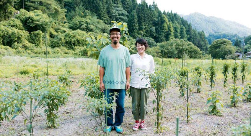 Bamboo Family