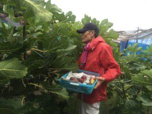 Fruits farm Tachibana in Tsushima island